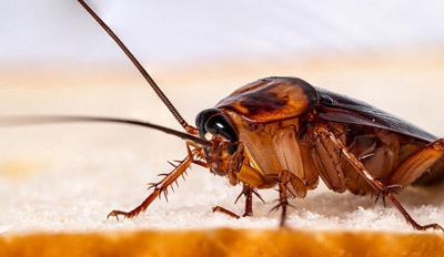eapc 0000 cockroach pest control