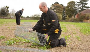 wildlife pest control Suffolk