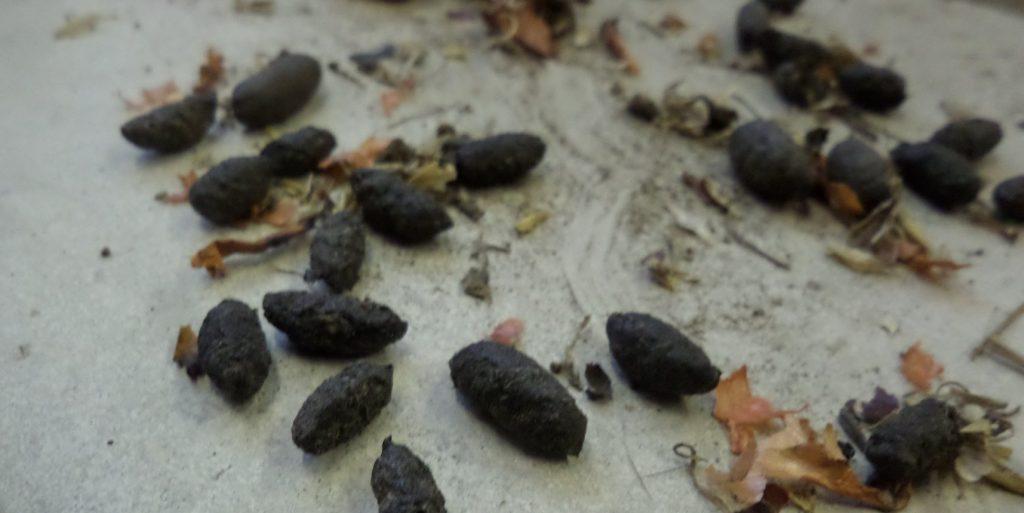 rat extermination Ipswich