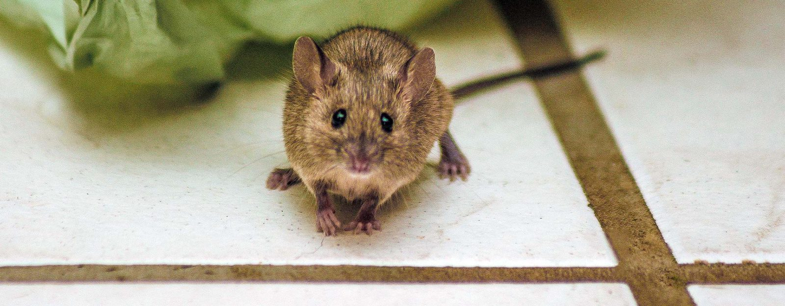 Mouse Control Treatments