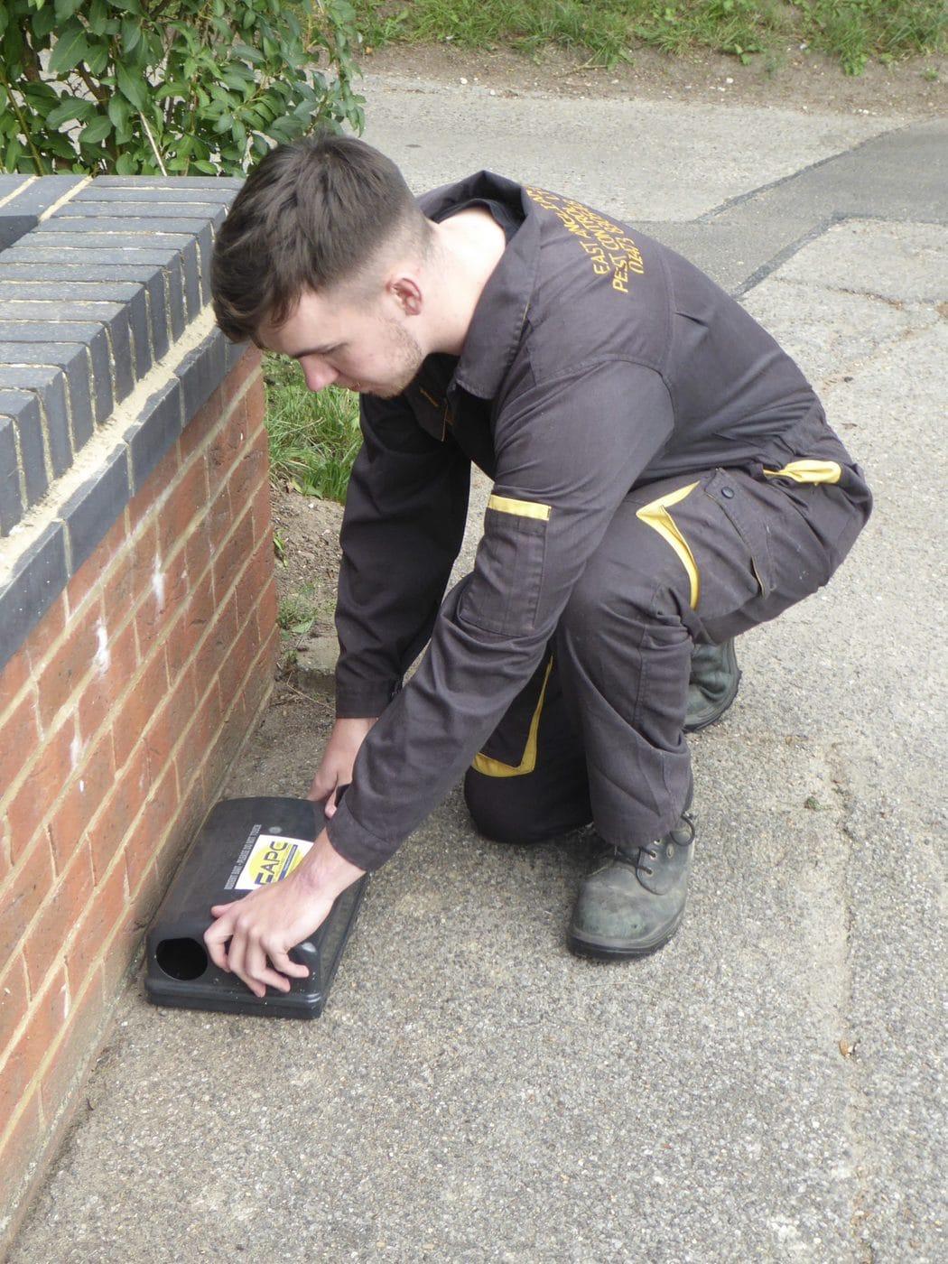 mice pest control Ipswich