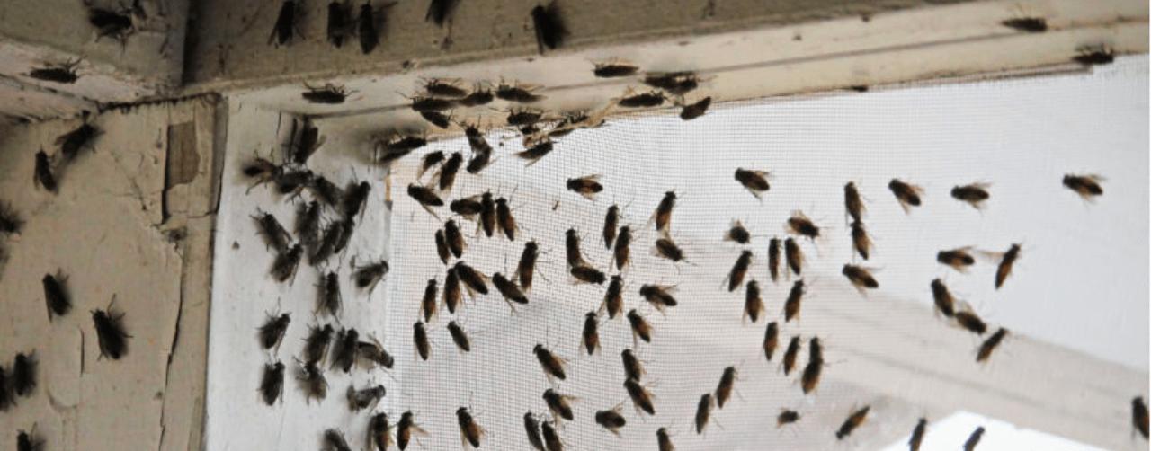 fly pest control Ipswich