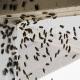 cluster flies pest control Ipswich